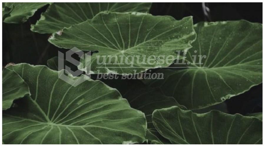 ظرفیت بالای  تولید پلیمر با پایه گیاهی